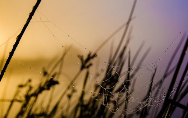 Фото обои природа, фон, паутина