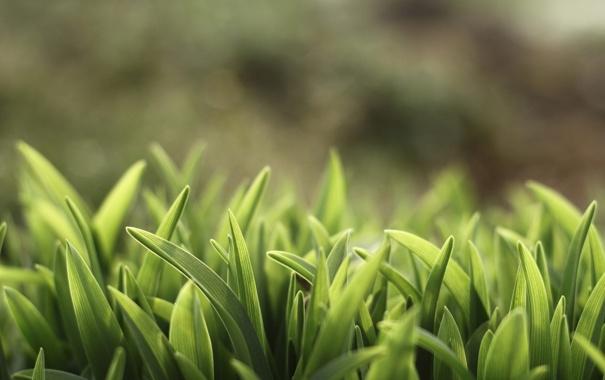 Фото обои зелень, макро, свет, размытие, Трава