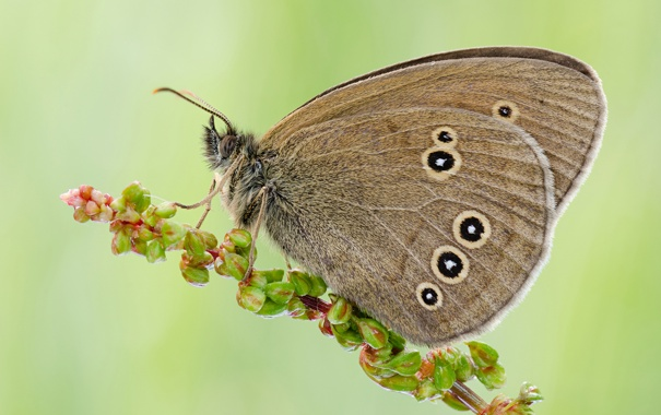Фото растение цветок бабочка фон