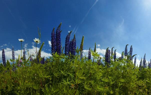 Фото обои трава, цветы, природа, фото, обои