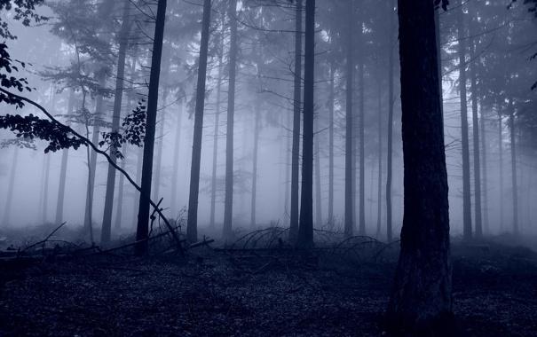 Фото обои лес, деревья, природа, фото