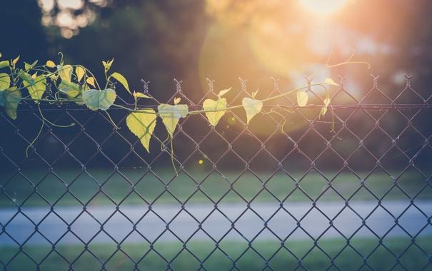 Фото обои листья, ограда, забор, листики