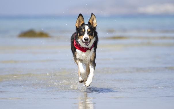 Фото обои радость, вода, бег, брызги, морда, берег, пёс
