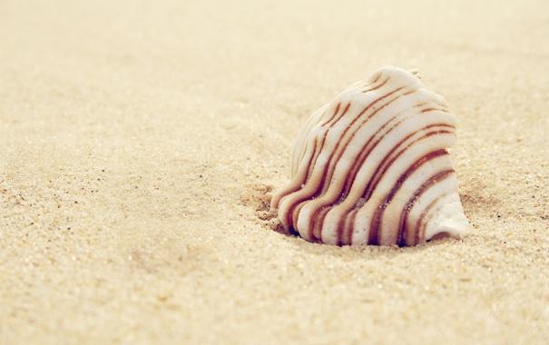 Фото обои песок, shell, macro, 2560x1600, sand, ракушка, макро