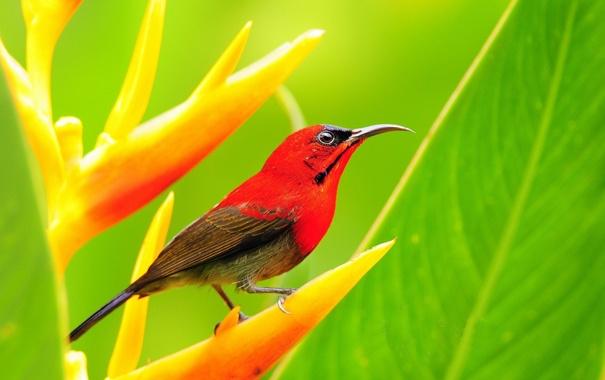 Фото обои птица, растение, клюв