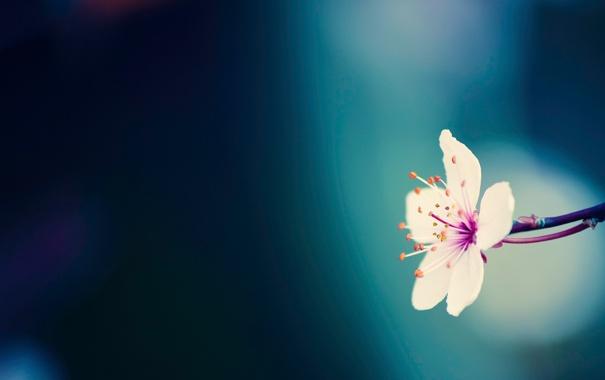 Фото обои цветок, макро, синий, природа, фото, фон, обои