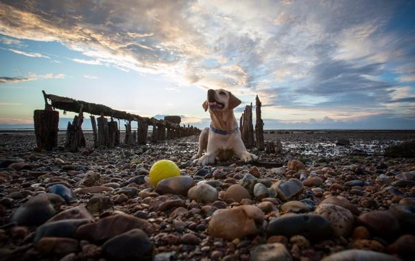 Фото обои небо, камни, собака
