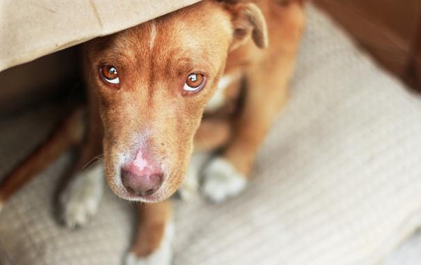 Фото обои взгляд, друг, собака