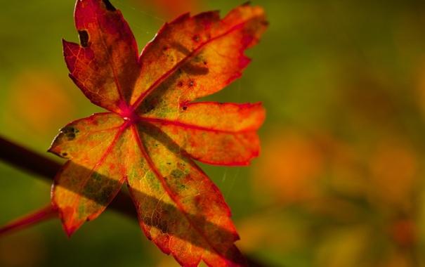 Фото обои осень, макро, свет, яркий, лист, цвет, тень