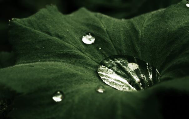 Фото обои капли, лист, бархат, tale