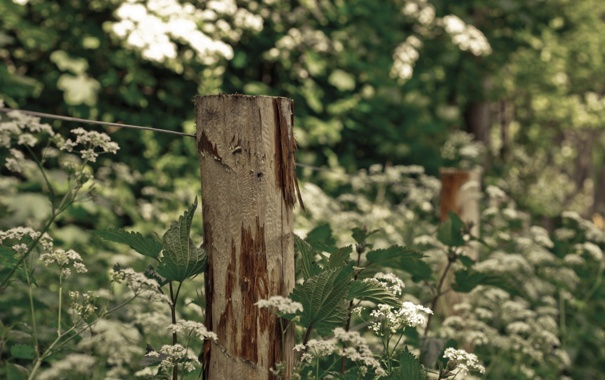 Фото обои макро, забор, травы