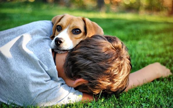 Фото обои друг, собака, мальчик, парень, пёс, photo Bogdan Lucaci