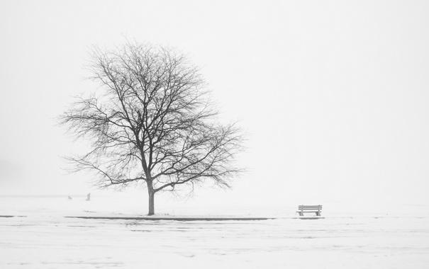 Фото обои пейзаж, туман, дерево, скамья