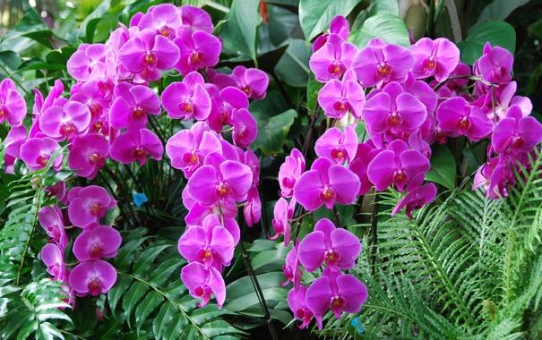 Фото обои листья, орхидеи, экзотика