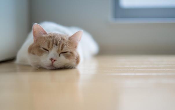 Фото обои сон, спит, Ben Torode, Benjamin Torode, лежа, пол, Hannah