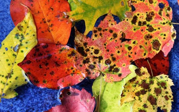 Фото обои осень, листья, цвета
