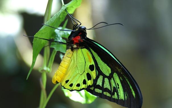 Фото обои макро, растение, Бабочка