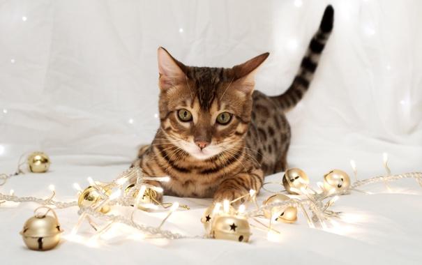 Фото обои кошка, кот, украшения, огни, праздник, новый год, гирлянда