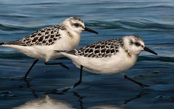 Фото обои вода, птицы, арт, живопись