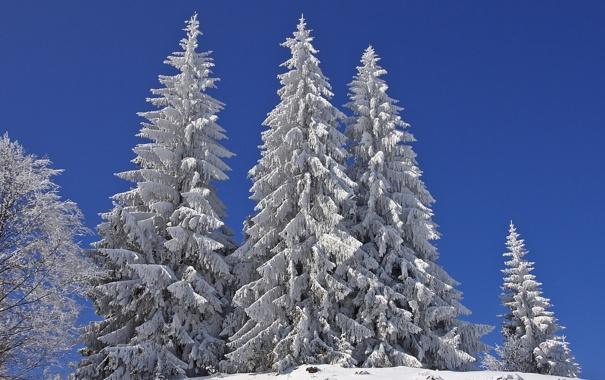 Фото обои зима, небо, снег, природа, ели