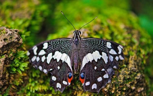 Фото обои макро, бабочка, мох