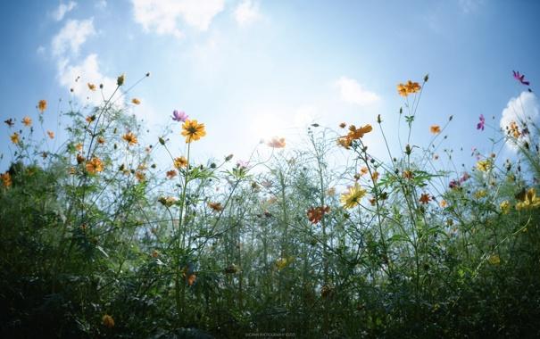 Фото обои небо, листья, солнце, облака, цветы, стебли, бутоны