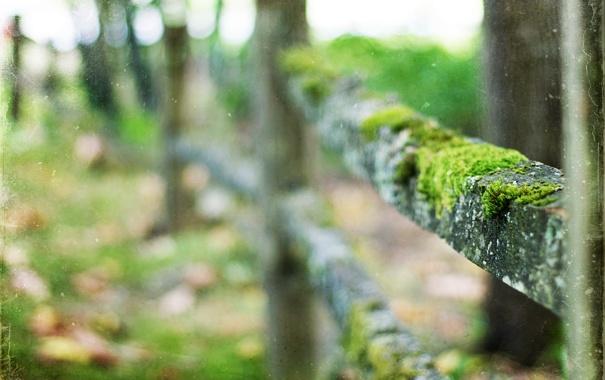 Фото обои макро, стиль, фон, забор, мох