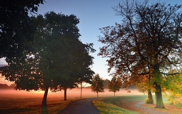 Фото обои дорога, осень, деревья, туман, парк, рассвет