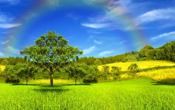 Фото обои деревья, небеса, радуга, солнечный свет, Золотой луг