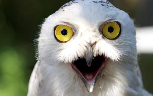 Фото обои глаза, желтый, птица, клюв