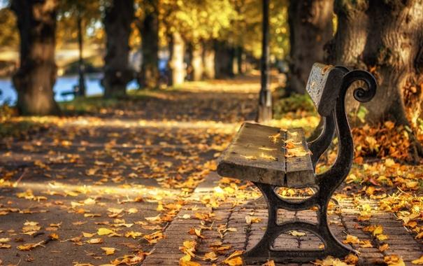 Фото обои листья, город, осень, парк, скамья