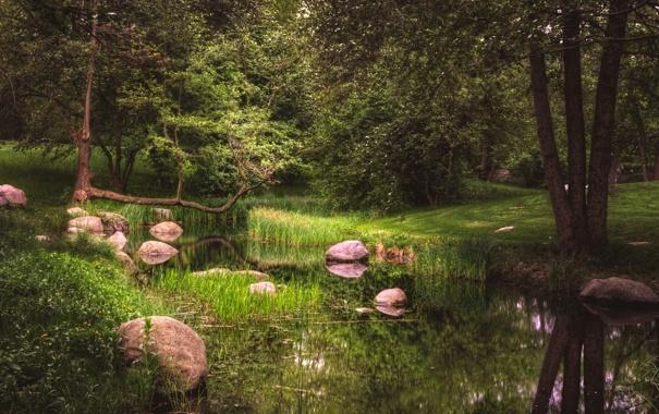 Фото обои зелень, трава, деревья, пруд, парк, камыши, камни