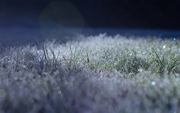 Фото обои иней, трава, свет, блики, заморозки