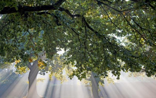 Фото обои листья, свет, дерево