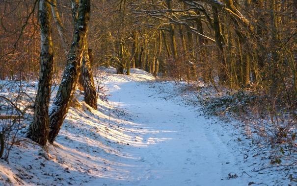Фото обои день, зима, лесок, лучи, тропинка, солнце