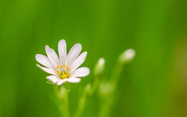 Фото обои цветок, природа, фон, лепестки