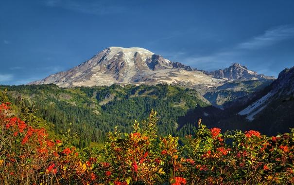Фото обои небо, деревья, цветы, горы