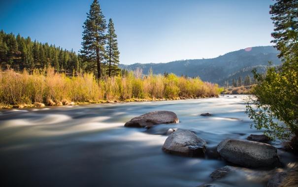 Фото обои лес, деревья, природа, река