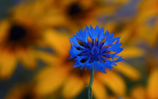 Фото обои цветок, лепестки, луг, экзотика