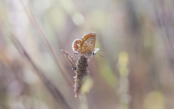 Фото обои макро, бабочки, нежность, крылья