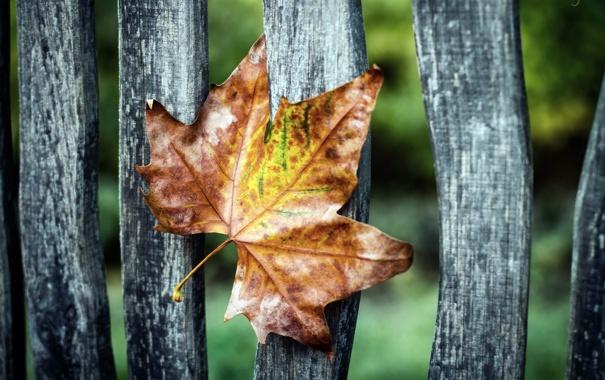 Фото обои макро, лист, забор