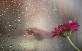 Картинка цветок, стекло, фон