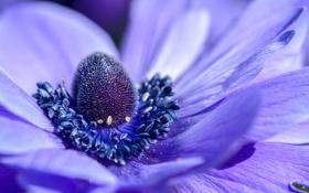 Обои цветок, фиолетовый, макро, природа, лепестки, красивый