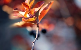 Обои осень, веточька, autumn blur