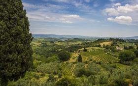 Картинка деревья, пейзаж, поля, Италия, панорама, Italy, Тоскана