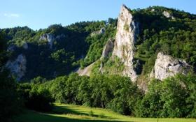 Картинка зелень, лес, солнце, природа, гора