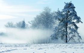 Картинка зима, снег, пейзаж, природа, winter