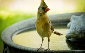 Картинка вода, птица, клюв, фонтан, хохолок