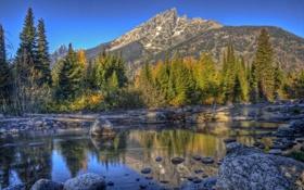 Обои США, камни, ручей, лес, деревья, коряги, горы