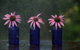Обои цветы, фон, дождь